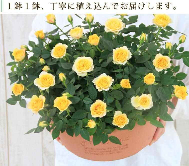 1鉢1鉢、丁寧に植え込んでお届けします。