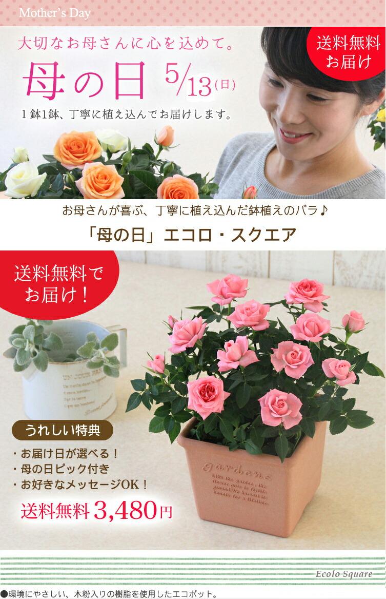 【母の日】送料無料★エコロ・スクエア!