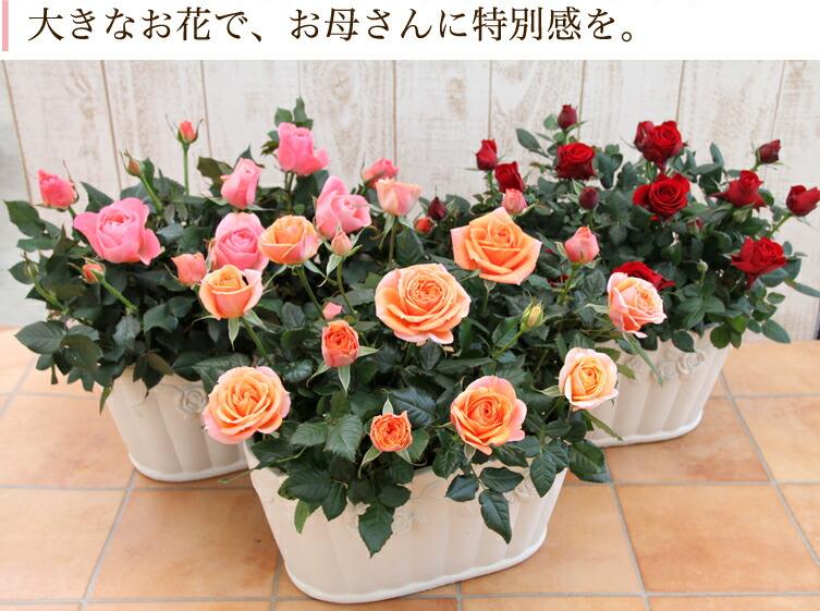 大きなお花で、お母さんに特別感を。