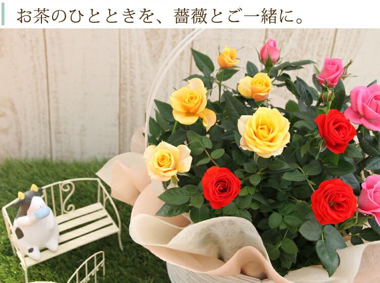 お茶のひとときを、薔薇とご一緒に。