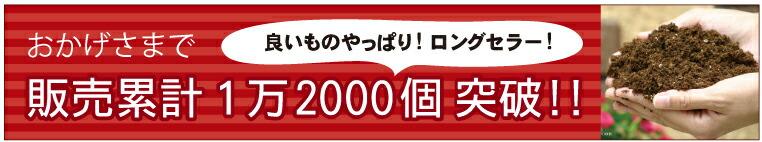 12000個突破