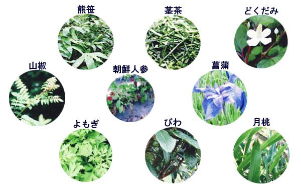植物抽出エキス