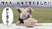平田牧場 こめ育ち豚