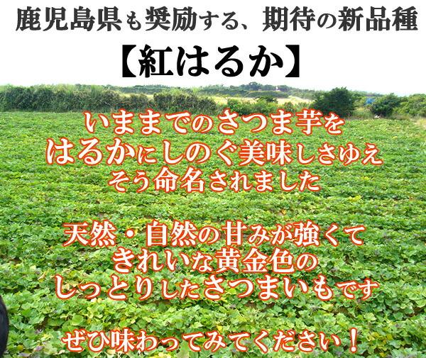 鹿児島県奨励品種紅はるか 天然・自然の強い甘み&きれいな黄金色のさつまいもです★
