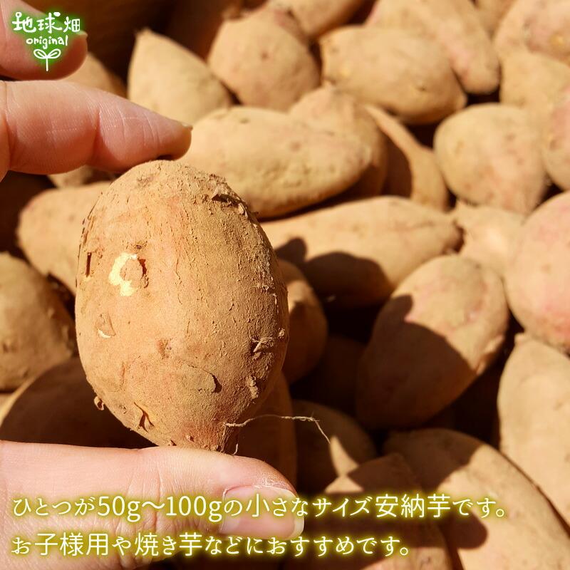 地球畑の安納芋