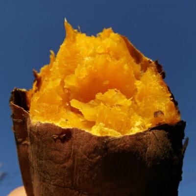 鹿児島県産安納芋
