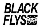 BLACK FLYS(ブラックフライズ)