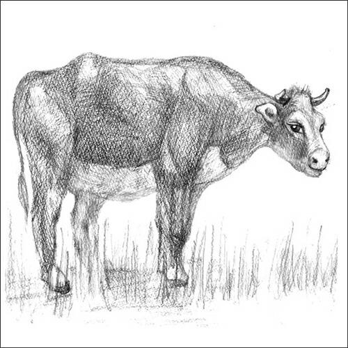 エーテル 牛革