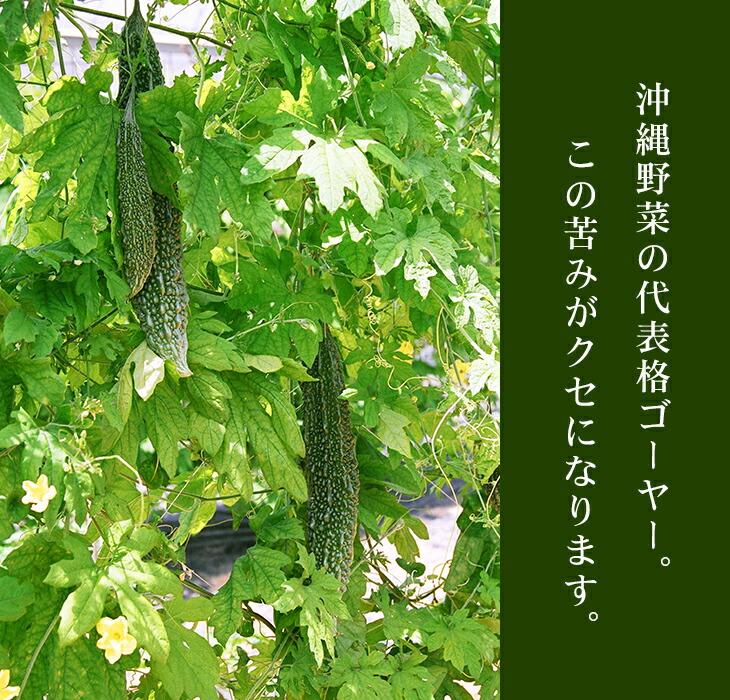 沖縄野菜の代表格ゴーヤー