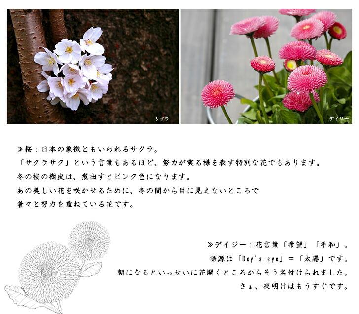 可愛らしい花の色