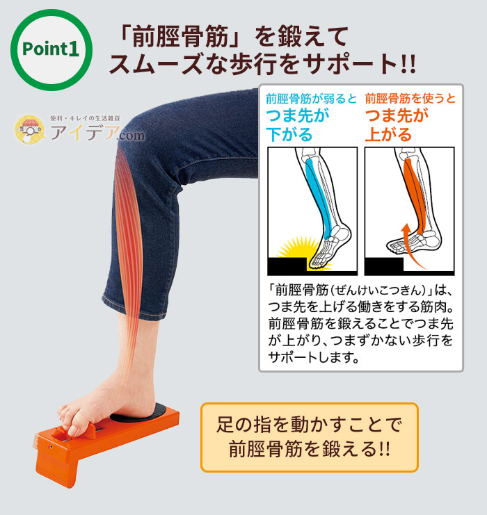 「前脛骨筋」を鍛えてスムーズな歩行をサポート!!