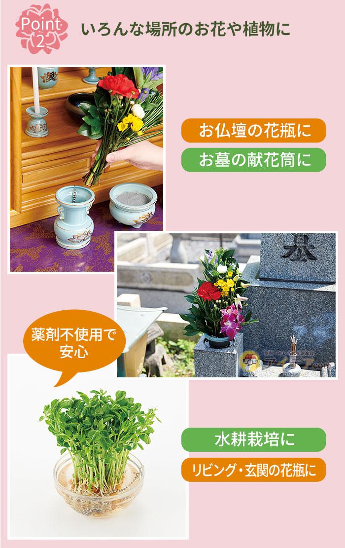 いろんな場所のお花や植物に