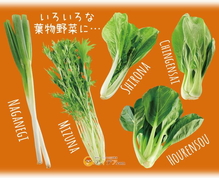 チビシャキちゃん(3個組):いろいろな葉物野菜に