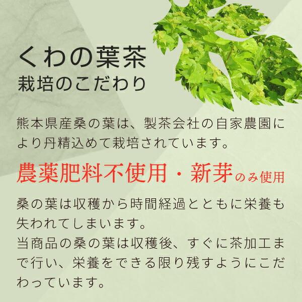 桑の葉茶栽培へのこだわり