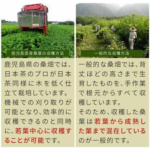 しっかりと管理され栽培ニチエーオーガニック桑の葉青汁