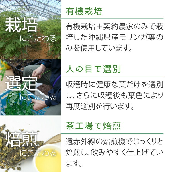 沖縄県産モリンガ茶の栽培、選別、焙煎へのこだわり