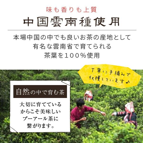 中国雲南省種シーサンパンナ地区茶葉使用のプーアール茶