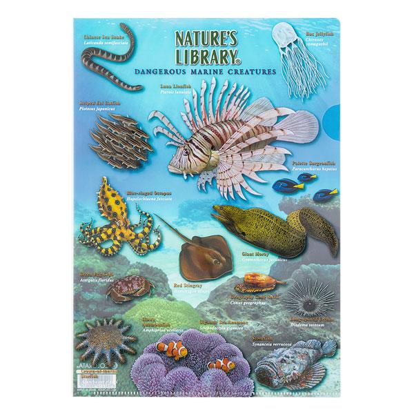 リクリアケース A4 海の危険生物