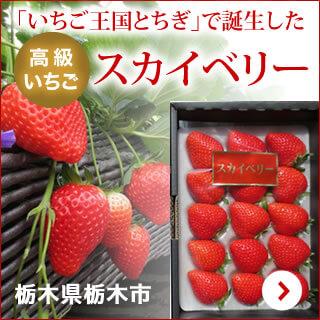 栃木県栃木市 「いちご王国とちぎ」で誕生した高級いちごスカイベリー