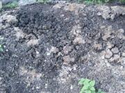 有機肥料、自然生育にこだわる自然栽培