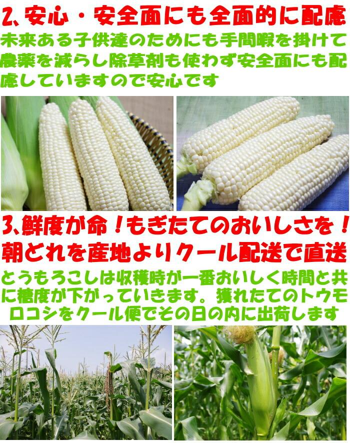香川とうもろこしピュアホワイト生産者アピール2