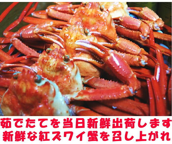 鳥取、未冷凍紅ずわい蟹取材4