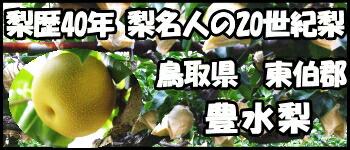 鳥取豊水梨はこちら
