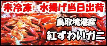鳥取境港直送紅ずわい蟹