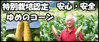 北海道三栄アグリとうもろこし