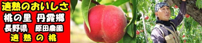 長野原田農園適熟の桃バナー