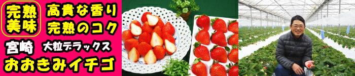 宮崎大野農園おおきみイチゴ