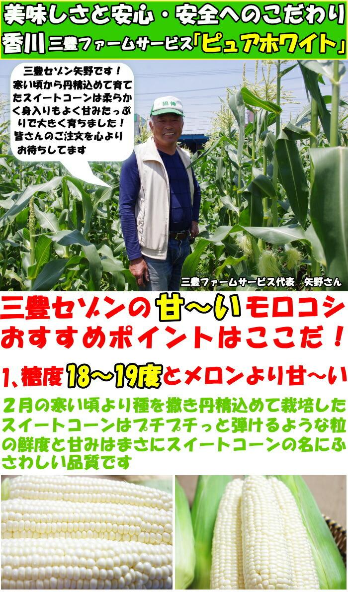 香川三豊ファーム紹介1