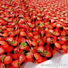 オックスイチゴ柄