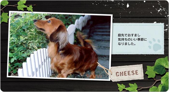 ペットまめえほん(dog)