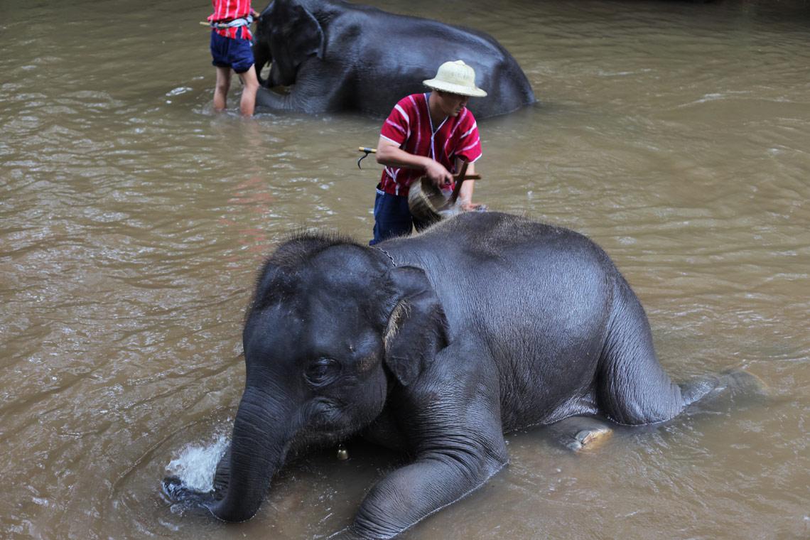 カレン族と象