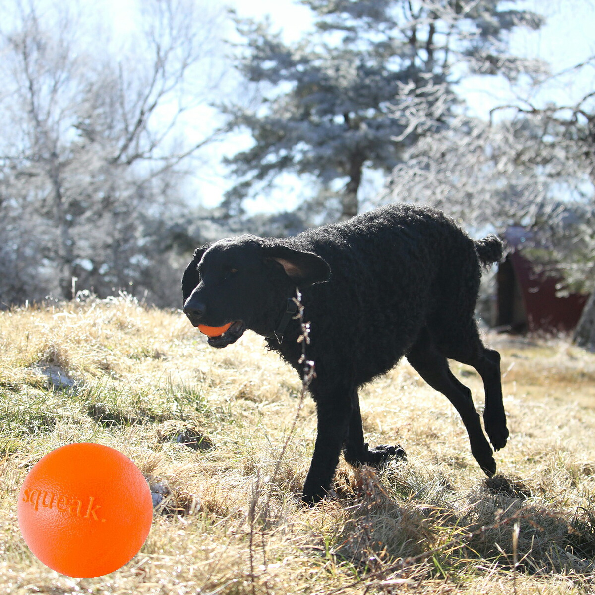 Planet Dog プラネットドッグ オービータフ スクイークボール