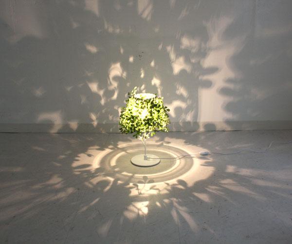 葉っぱの影