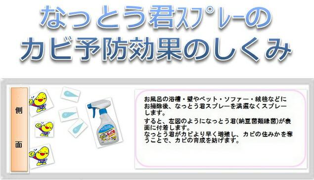 【カビ対策・カビ バイオ】カビ防止効果の仕組み