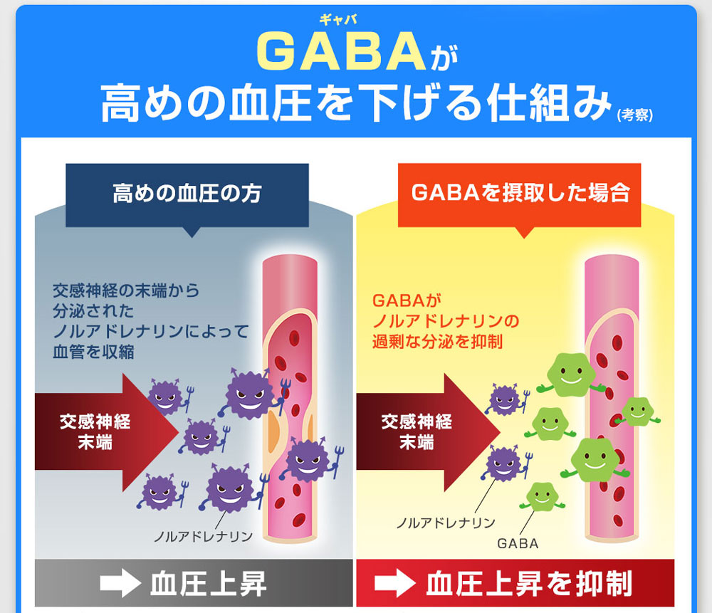 GABAが高めの血圧を下げる仕組み 交換神経から分泌されたおるアドレナリンによって血管を収縮 血圧上昇 GABAがノルアドレナリンの過剰な分泌を抑制 血圧上昇を抑制