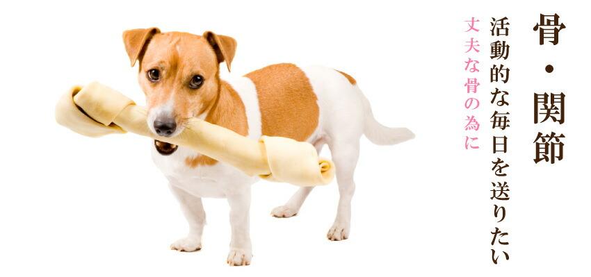 犬の骨・関節