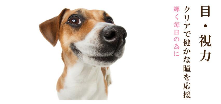 犬の目・視力に
