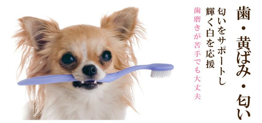 犬の歯・匂い・黄ばみ・歯磨き・口の匂い