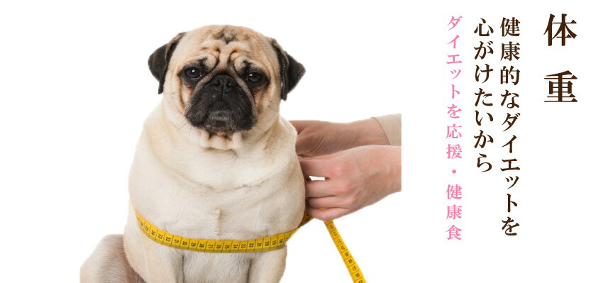 犬のダイエット・体重管理