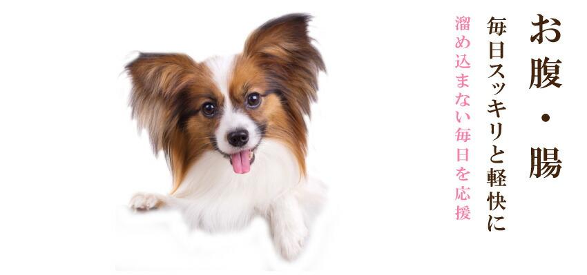 犬のお腹・腸の健康をサポート