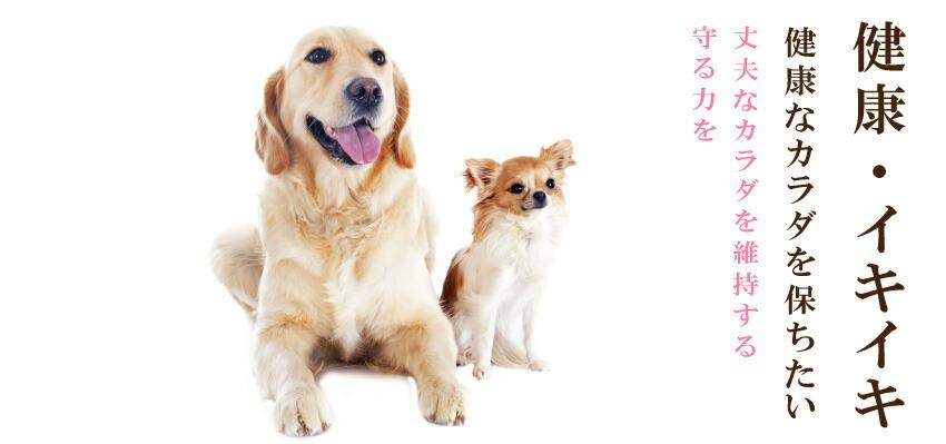 犬の体力・免疫力をアップ