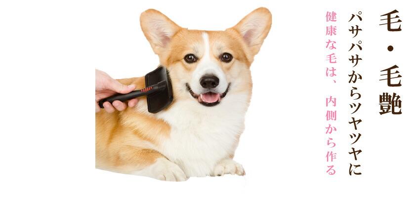 犬の毛・毛艶