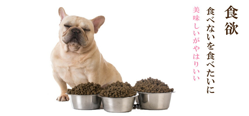 犬の食欲不振