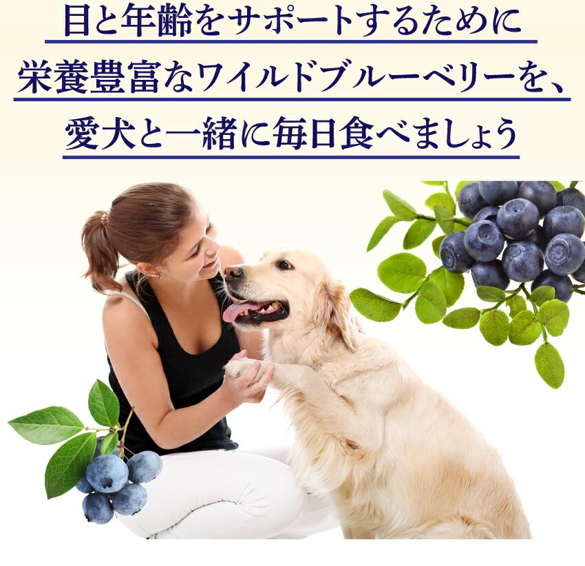 犬の吐くない賞・視力・目にアントシアニンが豊富なブルーベリー