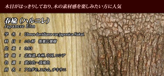 【春楡(ハルニレ)】 穏やかな目のハルニレ、目がもめているのがオヒョウニレ
