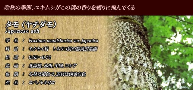 【タモ(ヤチダモ)】 晩秋の季節、ユキムシがこの葉の香りを頼りに飛んでくる